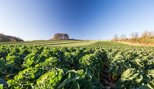 重庆某农产品加工公司注册成功案例